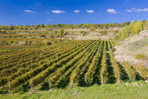 Vineyards in Czech Republic — Stock Photo