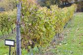 Weingut in deutschland — Stockfoto