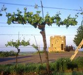 Lampelberg замок — Стоковое фото