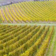 Stock Photo: Vineyards in Germany