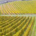 Vineyards in Germany — Stock Photo #3371079