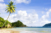 Tobago — Stockfoto