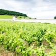 Royalty-Free Stock Photo: Vineyards near Gevrey-Chambertin