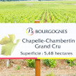 Grand cru vineyard of Chapelle-Chambertin — Stock Photo