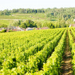 Vineyards near Gevrey-Chambertin - Stock Photo