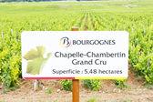 Grand cru vineyard of Chapelle-Chambertin — Stock Photo