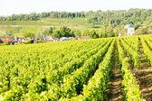 Vineyards near Gevrey-Chambertin — Stock Photo