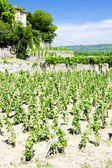 Vinha do château grillet, rhone-alpes, frança — Foto Stock