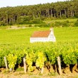 Vineyards in Burgundy, France - Stock Photo
