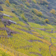 Vineyards in Moselle River Valley - Stock Photo