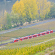 Vineyards near Pommern - Stock Photo