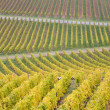 Vineyard in Germany — Stock Photo