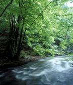 Metuje river — Stock Photo