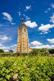 Vineyard at Arbois — Stock Photo