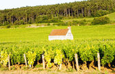 Vineyards in Burgundy, France — Stock Photo