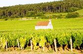 Vineyards in Burgundy, France — Stock Photo