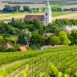 Stock Photo: Vineyards, Southern Moravia, Czech Republic