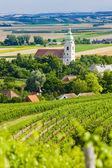 Vineyards, Southern Moravia, Czech Republic — Stock Photo