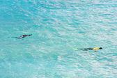 Snorkeling, Southern coast of Barbados, Caribbean — Stok fotoğraf
