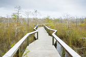 Everglades National Park, Florida, USA — Stock Photo