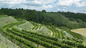 Vineyards, Czech Republic — Stock Photo