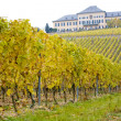 Johannisberg Castle with vineyard, Hessen, Germany — Stock Photo