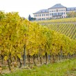 Johannisberg Castle with vineyard, Hessen, Germany - Stock Photo