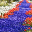 Keukenhof Gardens — Stock Photo #3562500