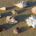 Seashells in the sand — Stock Photo