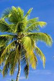 Palm tree's detail, Tobago — Stock Photo