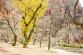 Zion national park, utah, etats-unis — Photo