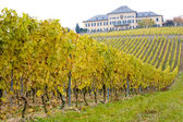 Johannisberg kasteel met wijngaard, hessen, duitsland — Stockfoto
