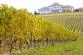 Město hrad s vinicí, hesensko, německo — Stock fotografie