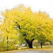 Autumnal tree, Maine, USA — Stockfoto #3603858