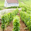 Vineyards near Gevrey-Chambertin, Cote de Nuits, Burgundy, Franc — Stock Photo