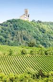 виноградники с замка ortenbourg, эльзас, франция — Стоковое фото