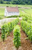 Vineyards near Gevrey-Chambertin, Cote de Nuits, Burgundy, Franc — Stock Photo