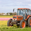 Stock Photo: Tractor, Netherlands