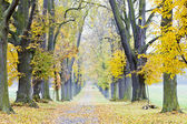 Autumnal alley — Stock Photo