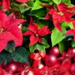 Christmas still life with Poinsettia — Stock Photo