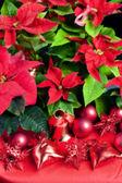Noel ile yılbaşı çiçeği natürmort — Stok fotoğraf