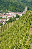 Vignoble des grands crus, thann, alsace, france — Photo