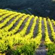 Vineyards near Gigondas, Provence, France — Stock Photo