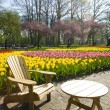 Keukenhof Gardens — Stock Photo #3779234
