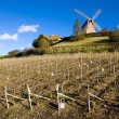 Windmill and vineyard near Verzenay, Champagne Region - Stock Photo