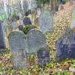 Stock Photo: Jewish Cemetery, Trebic, Czech Republic