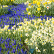 Keukenhof Gardens - Stock Photo
