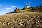 Windmill and vineyard near Verzenay, Champagne Region — Stock Photo