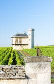 葡萄园、 勃艮第、 法国 — 图库照片