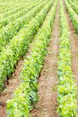 Vineyards, Burgundy — Stock Photo